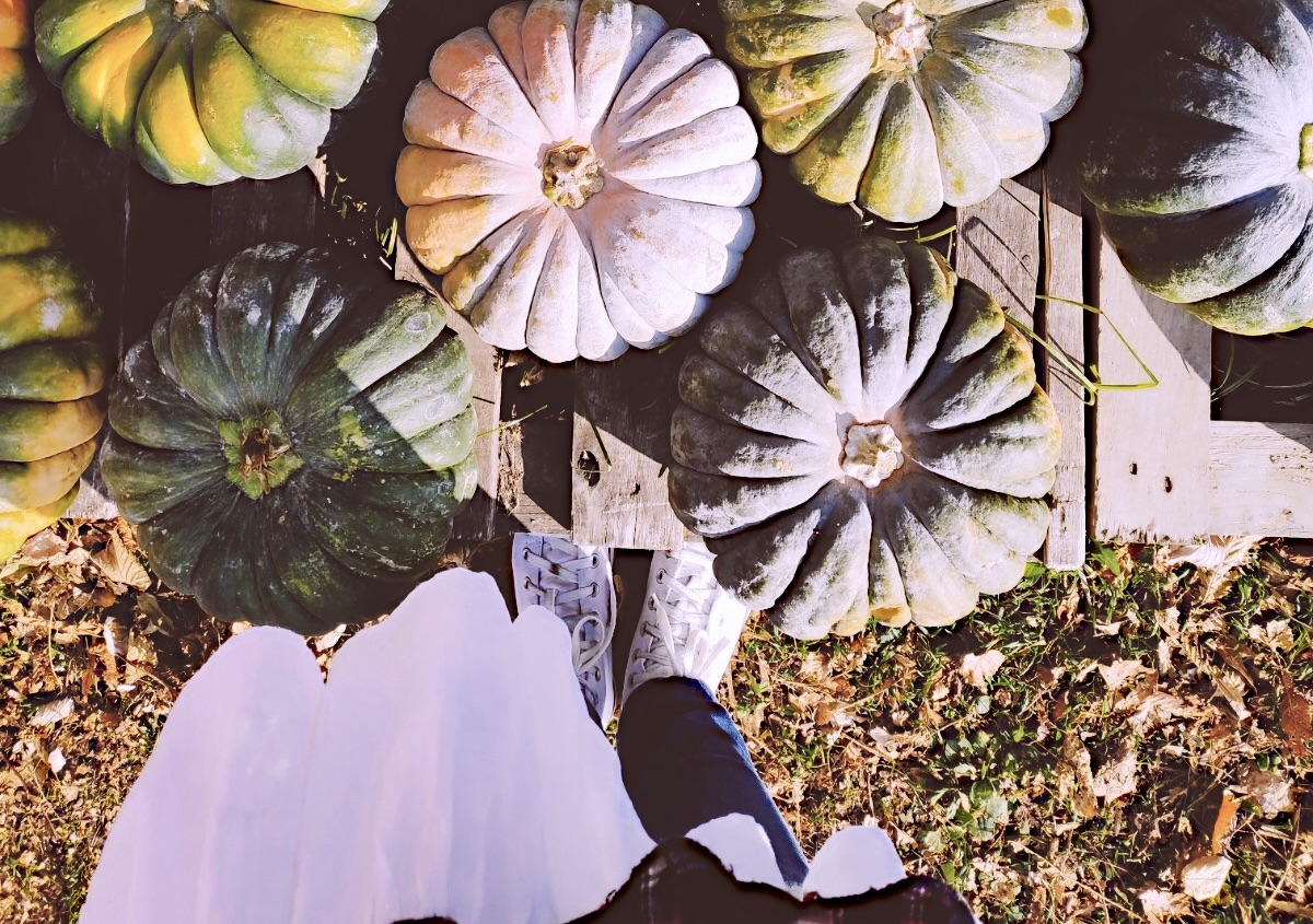 pumpkins and a girl
